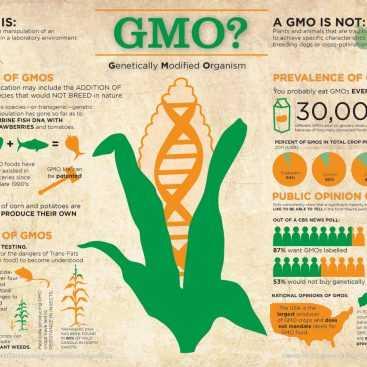 اصلاح ژنتیکی و محصولات تراریخته | گردش در یک گلخانه مدرن